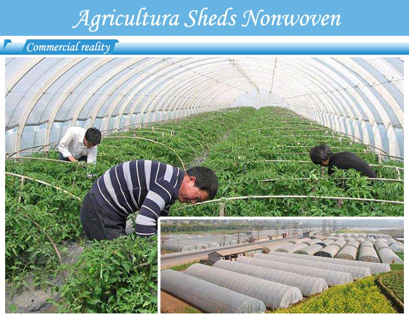 Hot best price weed control fabric control best weed control fabric antiuv Nanqixing